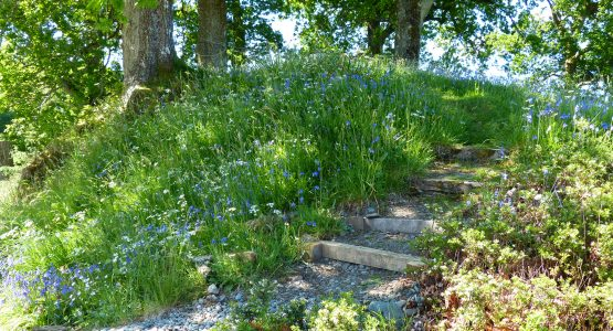 steps with bluebells and ground nuts in bloom