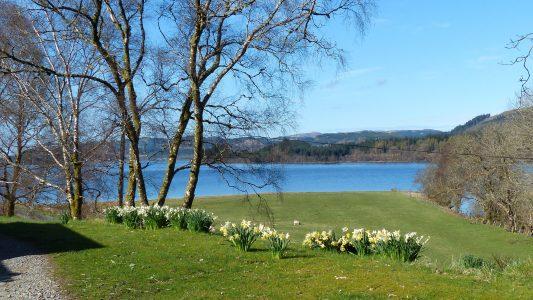 Loch Awe, scottish loch, daffodils, garden and a blackface sheep