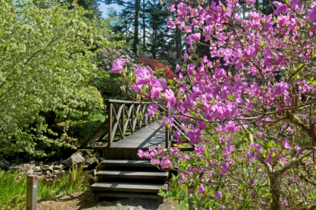 Azaleas blooming at Crarae Gardens and a bridge over the burn