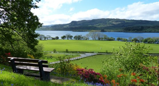 Bench with lovely view of Loch Awe, azaleas and bluebells in bloom, sun is shining and sheep are in the field