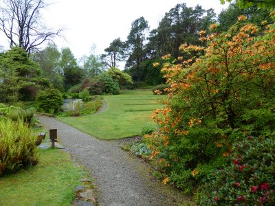 Path, azaleas in bloom, grass lawn, pond and trees at a national trust for scotland garden