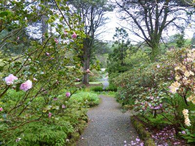paths, camelias, azaleas and grey sky