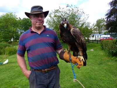 Heidi the golden eagle sitting on a gloved hand at a bird of prey experience