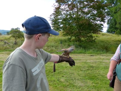 Kestrel on a gloved hand at a bird of prey experience